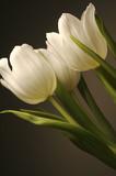 Fototapete Floral - Blume - Blume