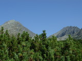 mountain with evergreen