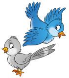 ptáků