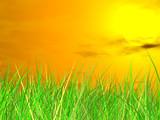 fresh green grass on  sundown background poster