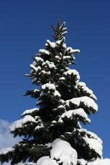 winter beautyful tree