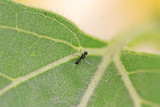 fly / insect on a leaf poster