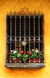 european window full of white and red geraniums poster