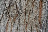 tree bark poster