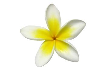 frangipani decal