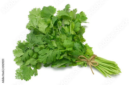 Leinwanddruck Bild coriander - cilantro