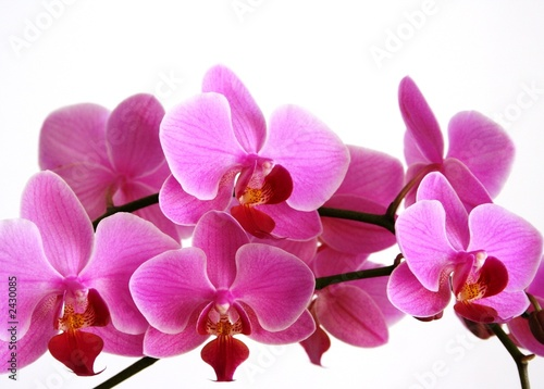 Fototapeten,orchidee,rosa,dekoration,exotisch