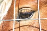 occhio del cavallo poster