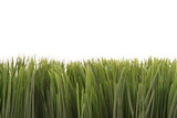 green grass with copyspace poster