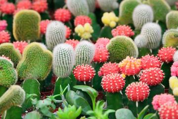 cacti 2