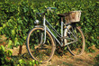 bicycle in vineyard