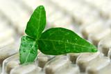 herbal supplement poster