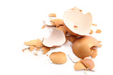 chips of the crushed egg shell poster