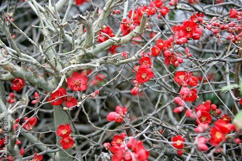 fleurs d`hiver 1