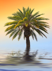 palm in water