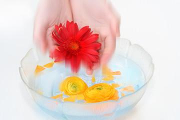 flowers  bath