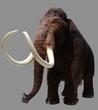 Fototapeten,mammut,aussterben,eiszeit,elefant