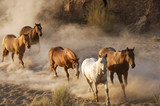 wild horses running poster