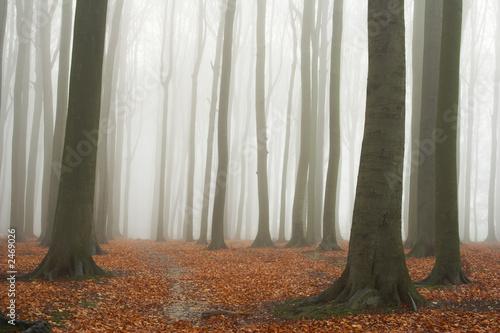 Fototapeta na wymiar - Fototapeta24.pl