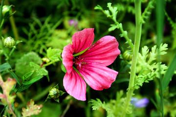summerflower