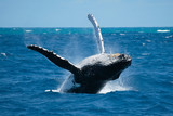Fototapeta morskich - ssak - Wodny Ssak
