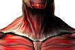 musculos del cuello