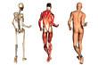 el cuerpo humano2