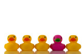 pink, purple rubber duck with yellow ducks poster