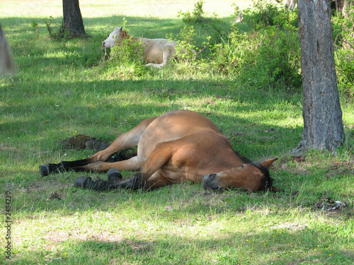 siesta in a shadow (horse languid with the heat)