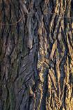 layered tree bark detail poster