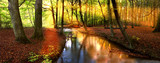 sun rays in forest-