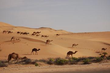 desert liwa avec alex - 6