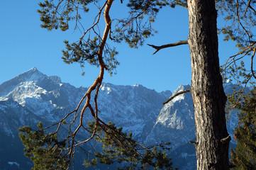 nadelbaum berge