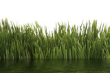 green grass with water effect poster