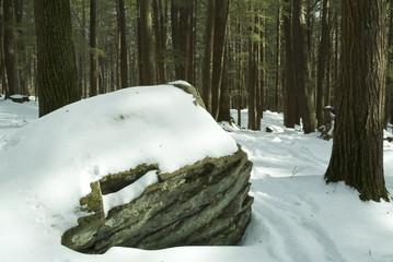 snow covered boulder in hemlock forest