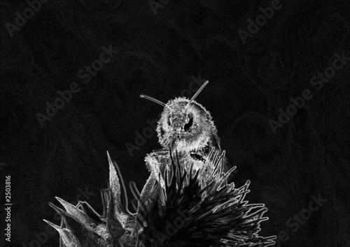 abeille noir et blanc