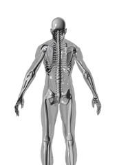 anatomy2_r