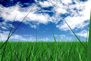 grass and a blue sky