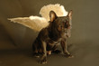 ange des chiens amoureux