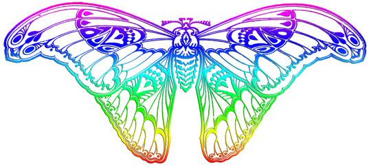 papillon white