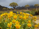wild flower landscape poster