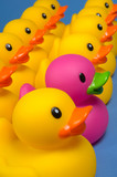 dare to be different - rubber ducks on blue poster