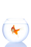 alone goldfish poster