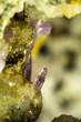 minerale di quarzo