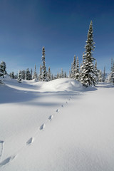 snow forest