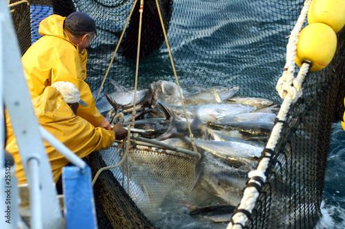 la pêche au thon-35
