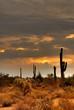 desert storm 31