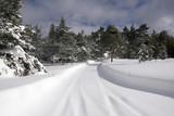 snow lane poster
