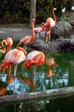 metro zoo flamingo pond poster