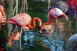 metro zoo flamingos poster